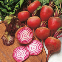 A striking Italian beetroot with ball-shaped light red roots which, when sliced, reveal highly ornamental rings. They are very sweet-tasting and ideal