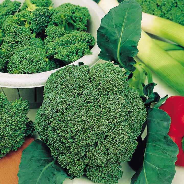Broccoli Seeds - F1 Sakuru