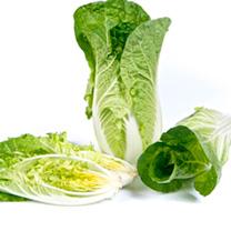 Chinese Cabbage Seeds - F1 Natsuki