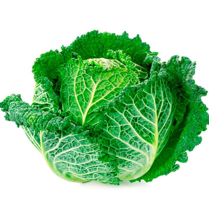 Cabbage Plants - Jaspis