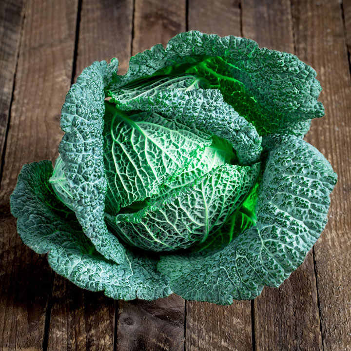 Cabbage Plants - Cordesa