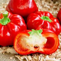 Pepper Sweet Grafted Plants - F1 Gogorez