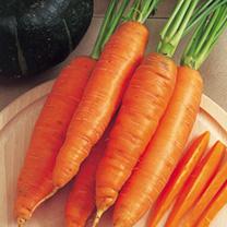 Carrot Seeds - F1 Bangor