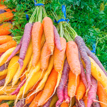 Carrot Seeds - Rainbow Mix