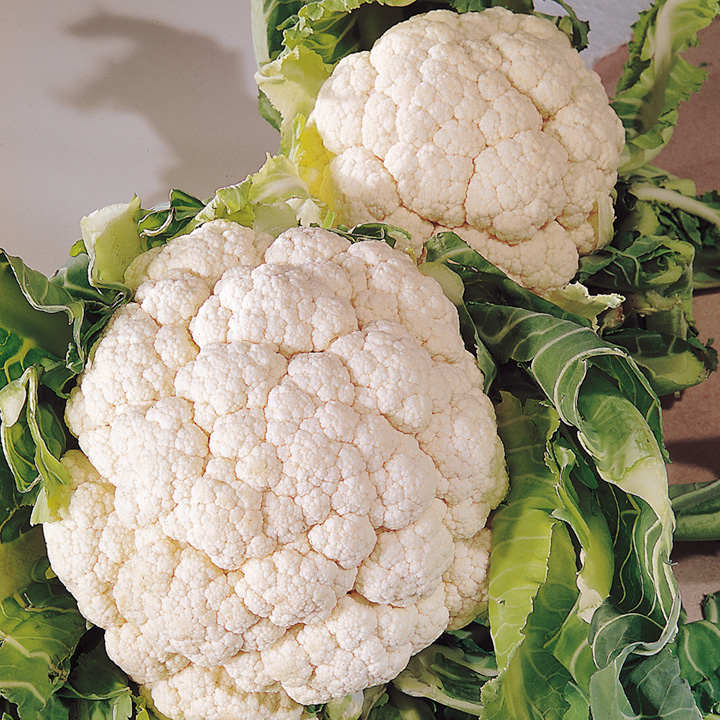 Cauliflower Seeds - Snowball A