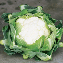 Our Selection Brassica Veg Potted Plants