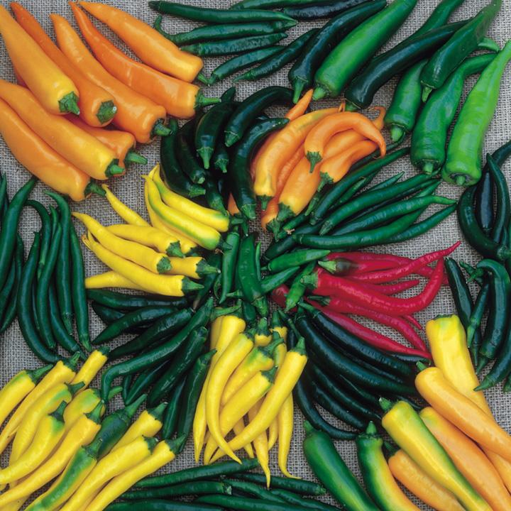 Pepper Chilli Seeds - Hot Stuff