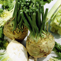 Celeriac Plants - Brilliant