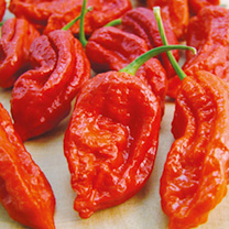 Pepper Chilli Seeds - Bhut Jolokia Fiery Furnace