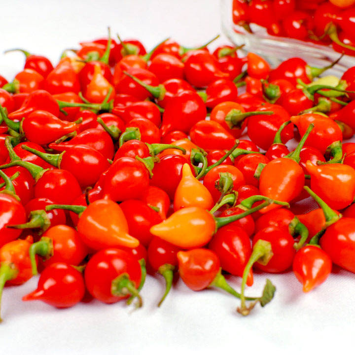 Pepper Chilli Seeds - Pearls