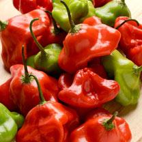 Pepper (Chilli) Plant - Mad Hatter