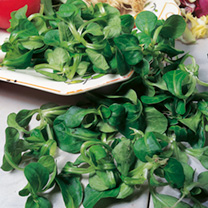 Corn Salad Seeds - Lambs Lettuce