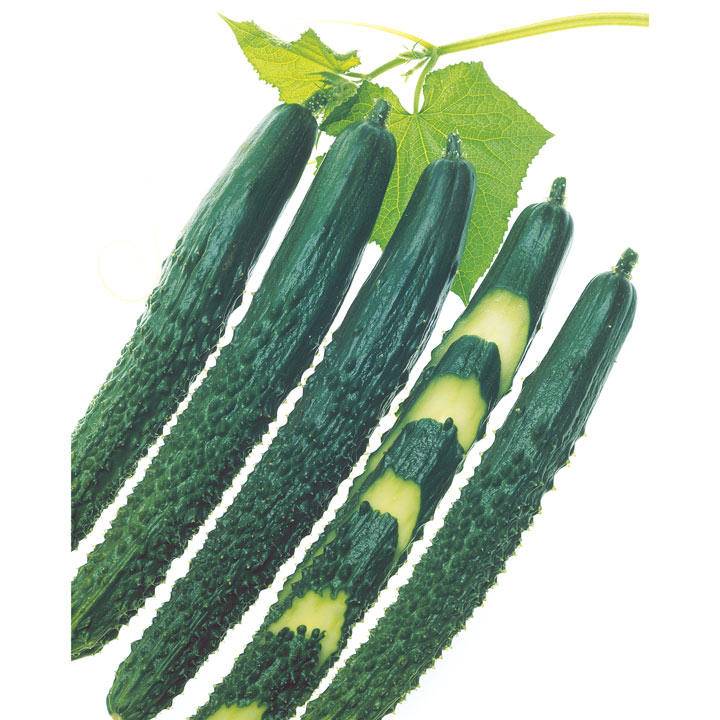 Cucumber Seeds - F1 Zipangu