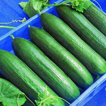Cucumber (Organic) Seeds - F1 Paska