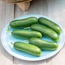 Cucumber (Organic) Seeds - Muncher