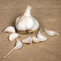 Garlic Bulbs - Lovers Collection