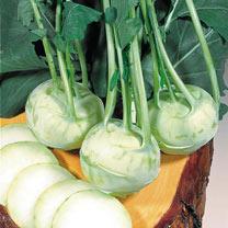 Kohlrabi (Organic) Seeds - Noriko