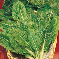 Keep Cropping Spinach Plants - Perpetual