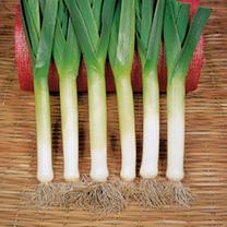 Leek (Organic) Seeds - Bandit