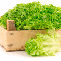 Lettuce Seeds - Lollo Bionda