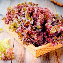 Lettuce Seeds - Lolla Rossa