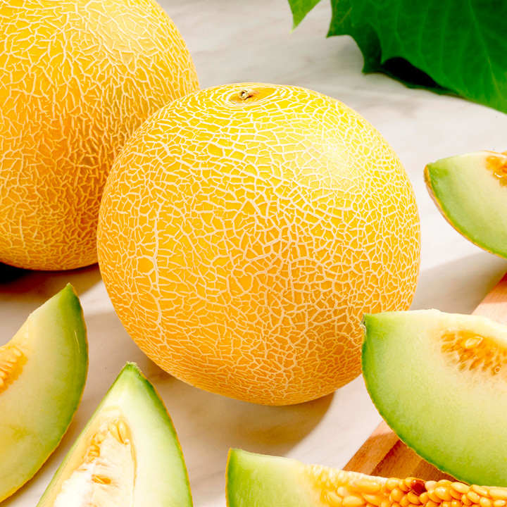 Melon (Galia) Seeds - F1 Lavi Gal