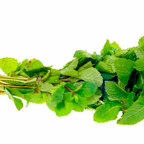 Click to view product details and reviews for Herb Seed Mint.