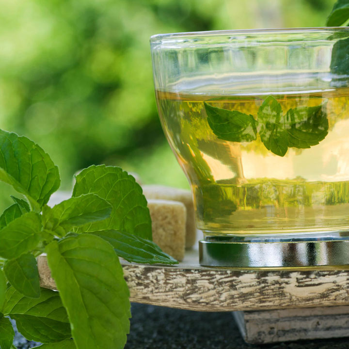 Mint Botanical Infusions Plants - Marokko