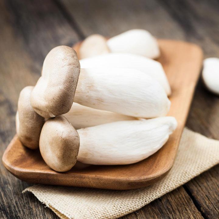 Mushroom Windowsill Kit - King Oyster