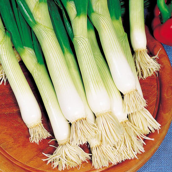 Onion (Salad) Seeds - Shimonita