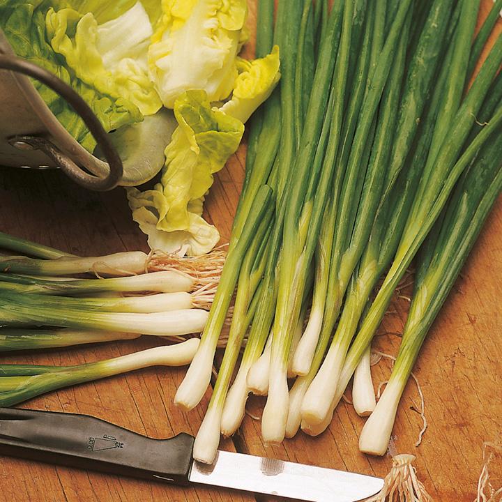 Onion (Salad) Seeds - Laser