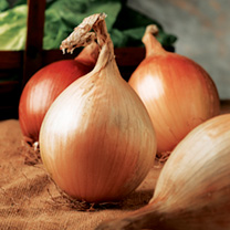 Large bulbs often used for exhibition. To ensure colour, shape and finish sow in January under glass at 18-21C (65-70F). Can also be sown outdoors in