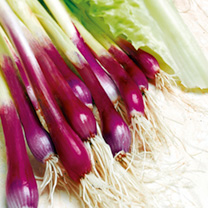 Onion (Salad) Seeds - Apache