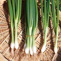 Onion (Salad) Seeds - White Lisbon - Winter Hardy Seeds