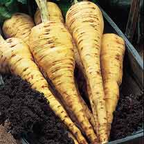 Parsnip Seeds - Tender and True