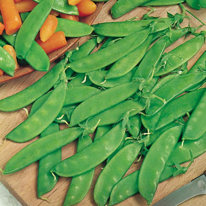 Pea Seeds - Oregon Sugar Pod