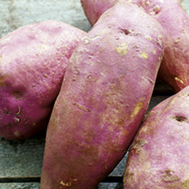 Sweet Potato Plants - Murasaki