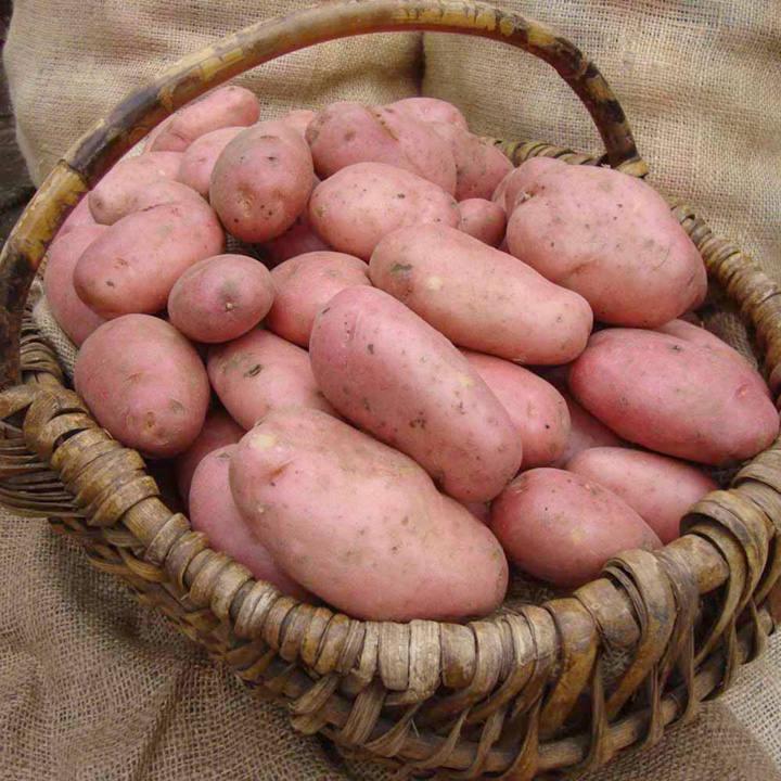 Seed Potatoes - Sarpo Mira 1kg
