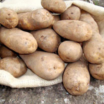 Click to view product details and reviews for Seed Potatoes Golden Wonder 1kg.