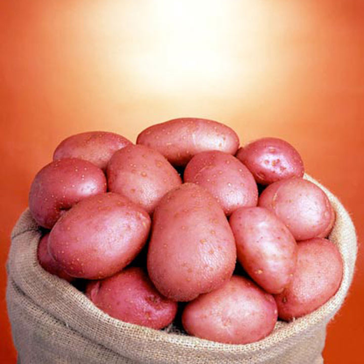 Seed Potatoes - Blight Tolerant Collection