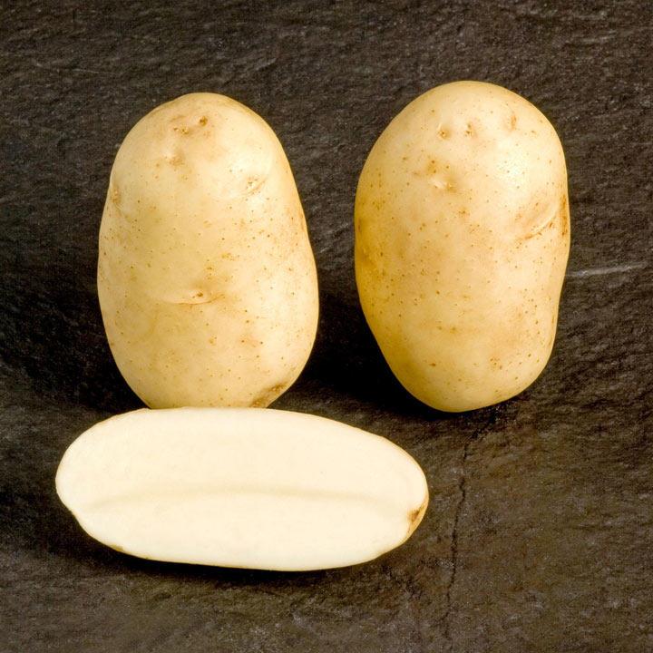 Seed Potatoes - McCain Shepody