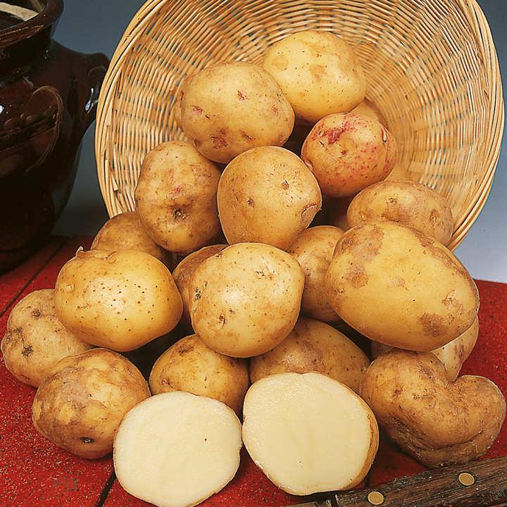 Seed Potatoes - Cara 1kg