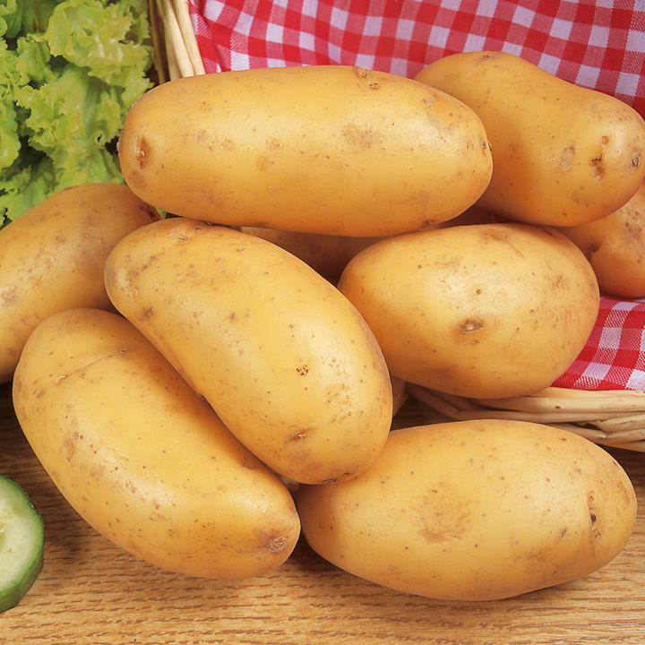 Seed Potatoes - Nicola 1kg