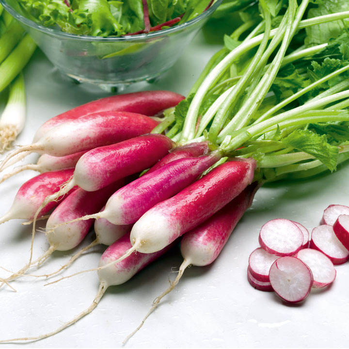 Radish French Breakfast Vegetable Seeds Vegetable Seeds