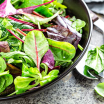 Bistro Salad Mix Plants