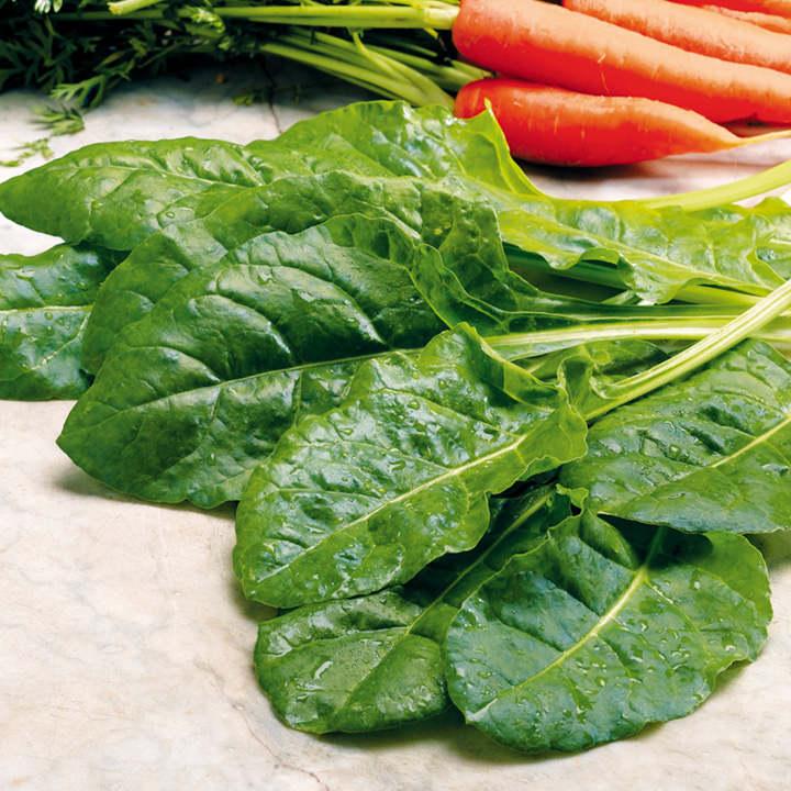 Leaf Beet (Organic) Seeds - Perpetual Spinach