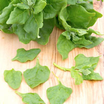 Spinach Seeds - New Zealand
