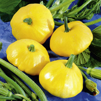 Squash Seeds - Sunburst Patty Pan