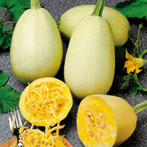 A delicious, easy-to-grow variety producing oval-shaped squashes with straw-coloured skin. It boasts excellent eating qualities with unique scoop out