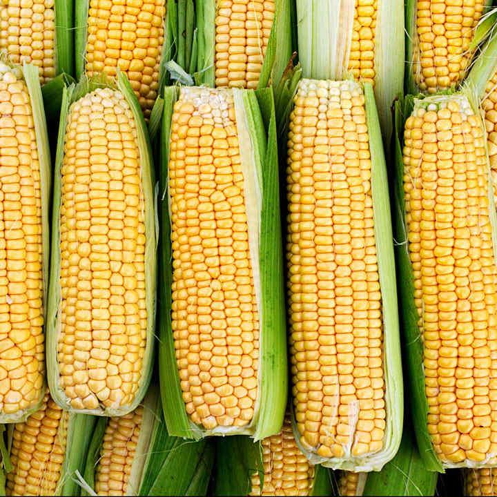 Sweet Corn (Organic) Seeds - Damaun